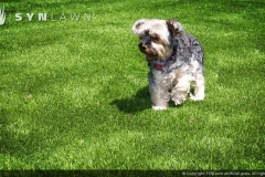 synlawn pet6